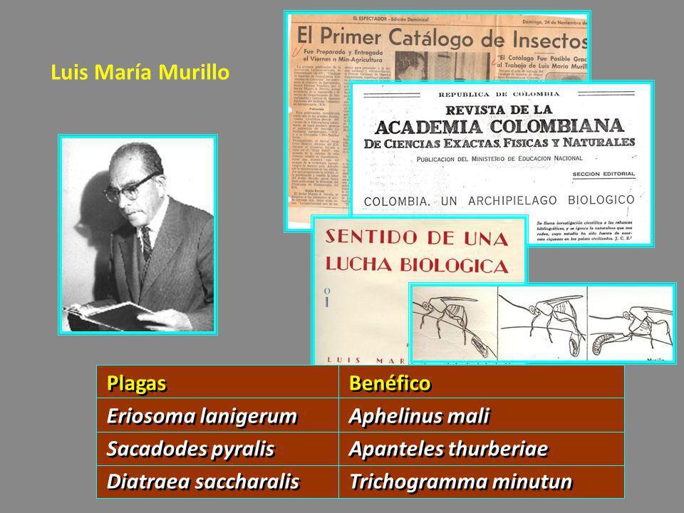 Luis María Murillo Plagas Benéfico Eriosoma lanigerum Aphelinus mali