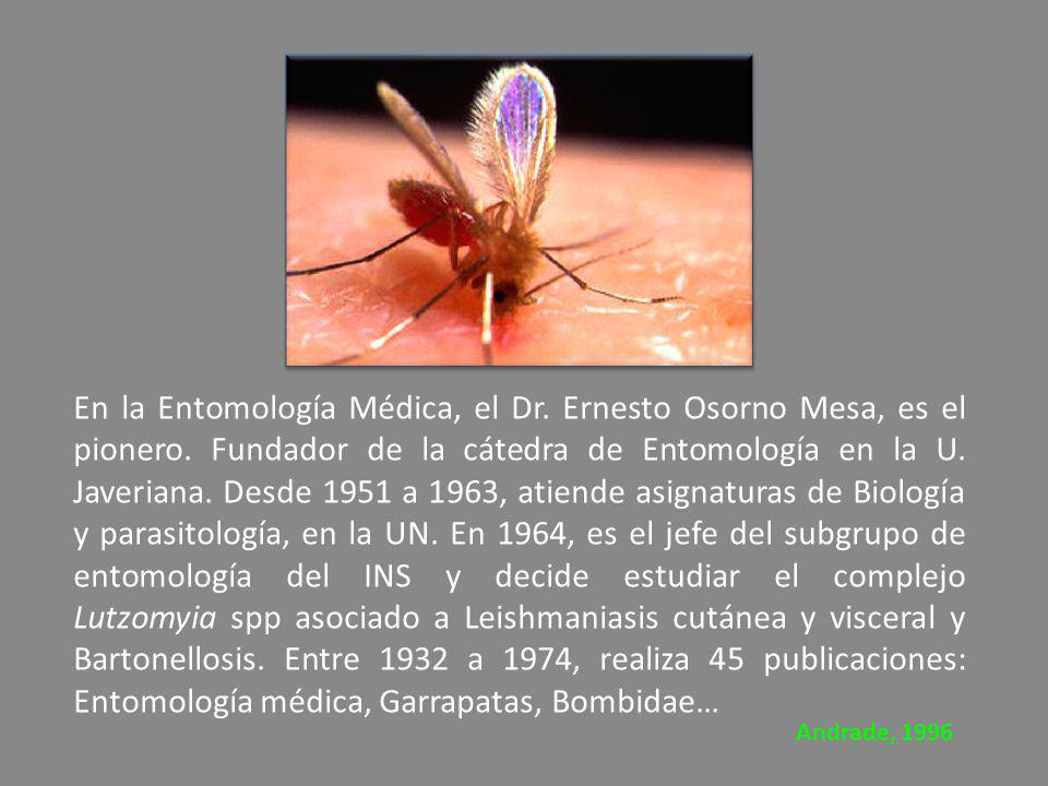 En la Entomología Médica, el Dr. Ernesto Osorno Mesa, es el pionero