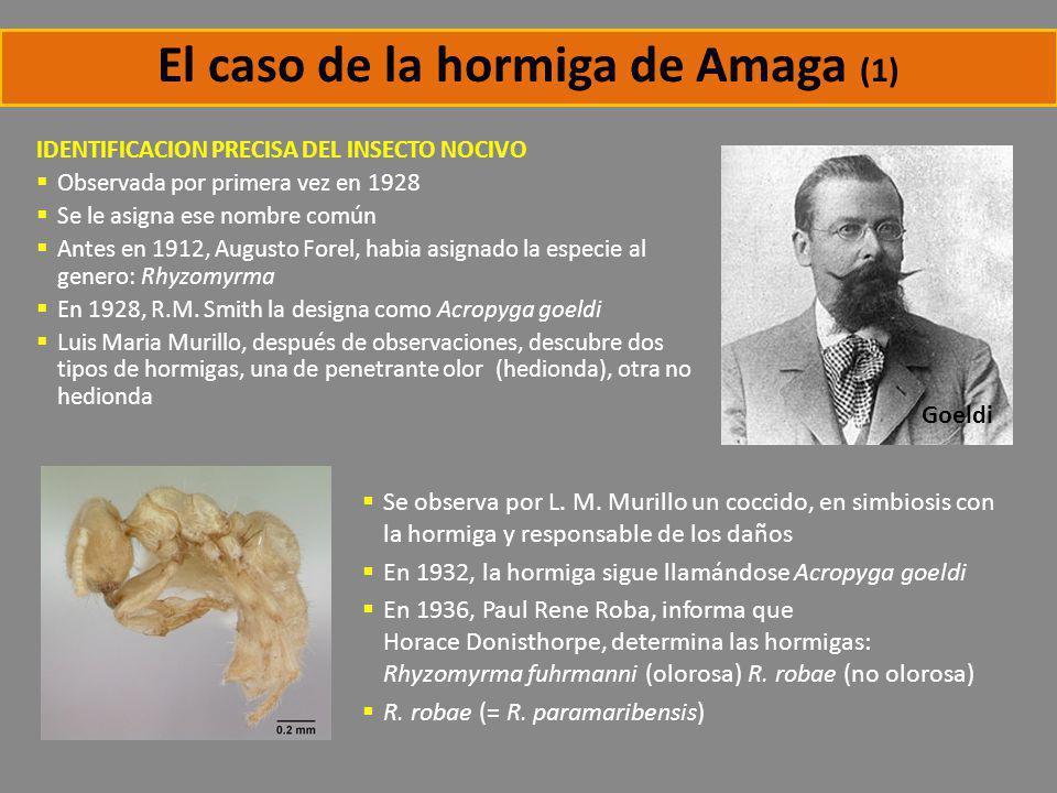 El caso de la hormiga de Amaga (1)