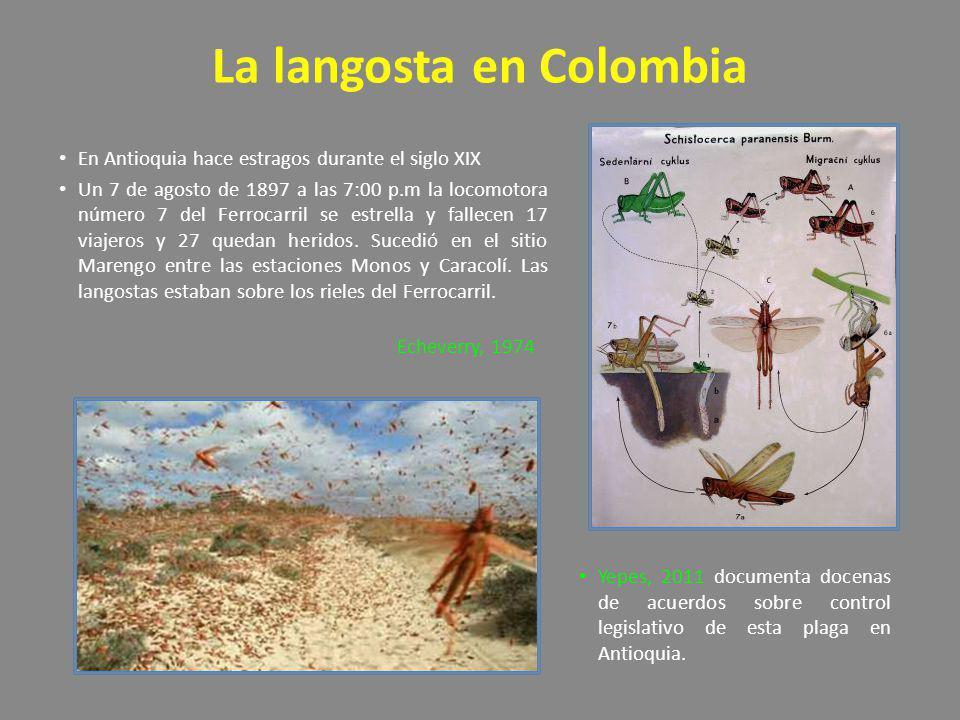 La langosta en Colombia