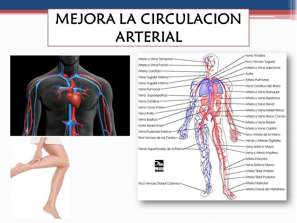 MEJORA LA CIRCULACION ARTERIAL