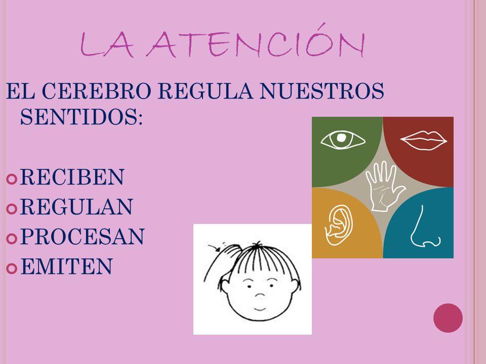 LA ATENCIÓN EL CEREBRO REGULA NUESTROS SENTIDOS: RECIBEN REGULAN