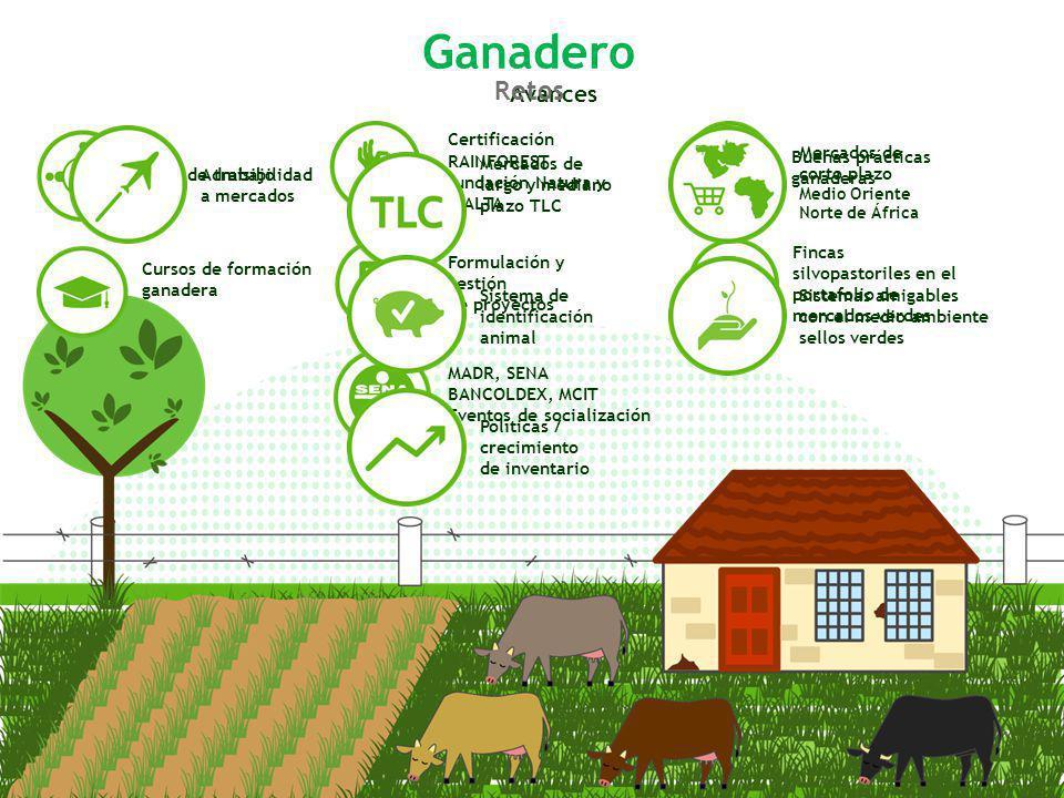 Ganadero Retos Avances Certificación RAINFOREST