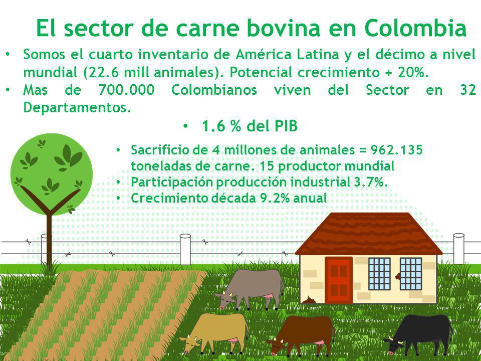 El sector de carne bovina en Colombia