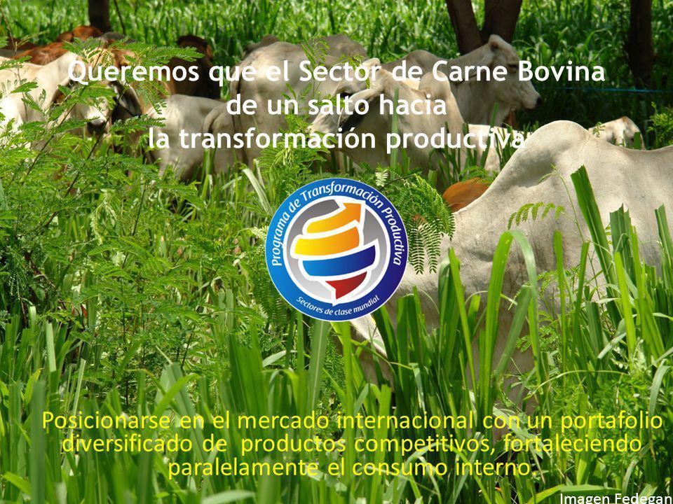 Queremos que el Sector de Carne Bovina de un salto hacia la transformación productiva