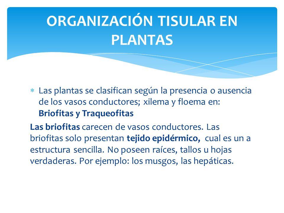 ORGANIZACIÓN TISULAR EN PLANTAS