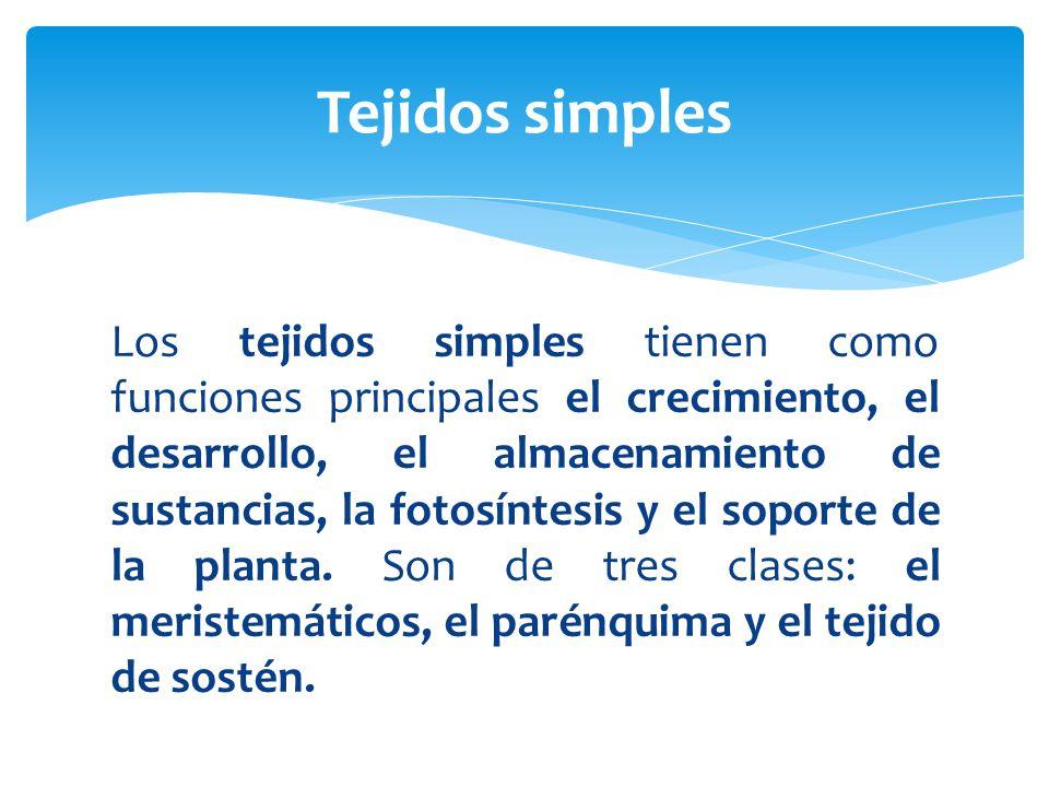 Tejidos simples