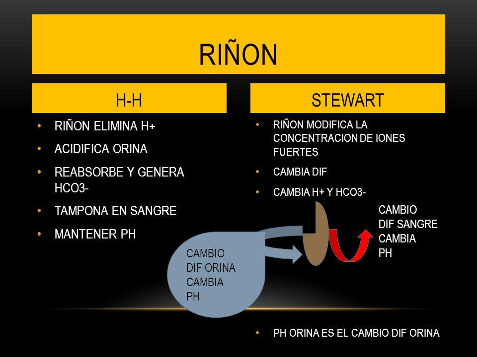 riñon H-H STEWART RIÑON ELIMINA H+ ACIDIFICA ORINA