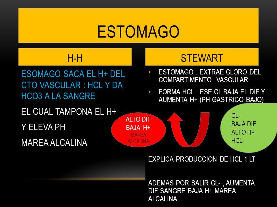 ESTOMAGO H-H. STEWART. ESOMAGO SACA EL H+ DEL CTO VASCULAR : HCL Y DA HCO3 A LA SANGRE EL CUAL TAMPONA EL H+ Y ELEVA PH MAREA ALCALINA