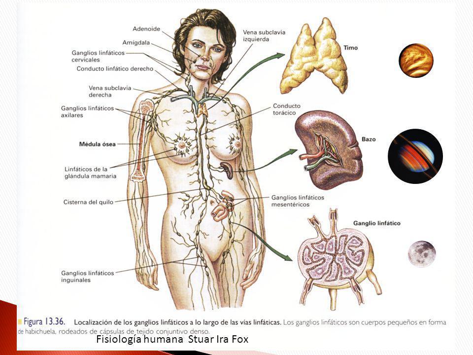 Fisiología humana Stuar Ira Fox