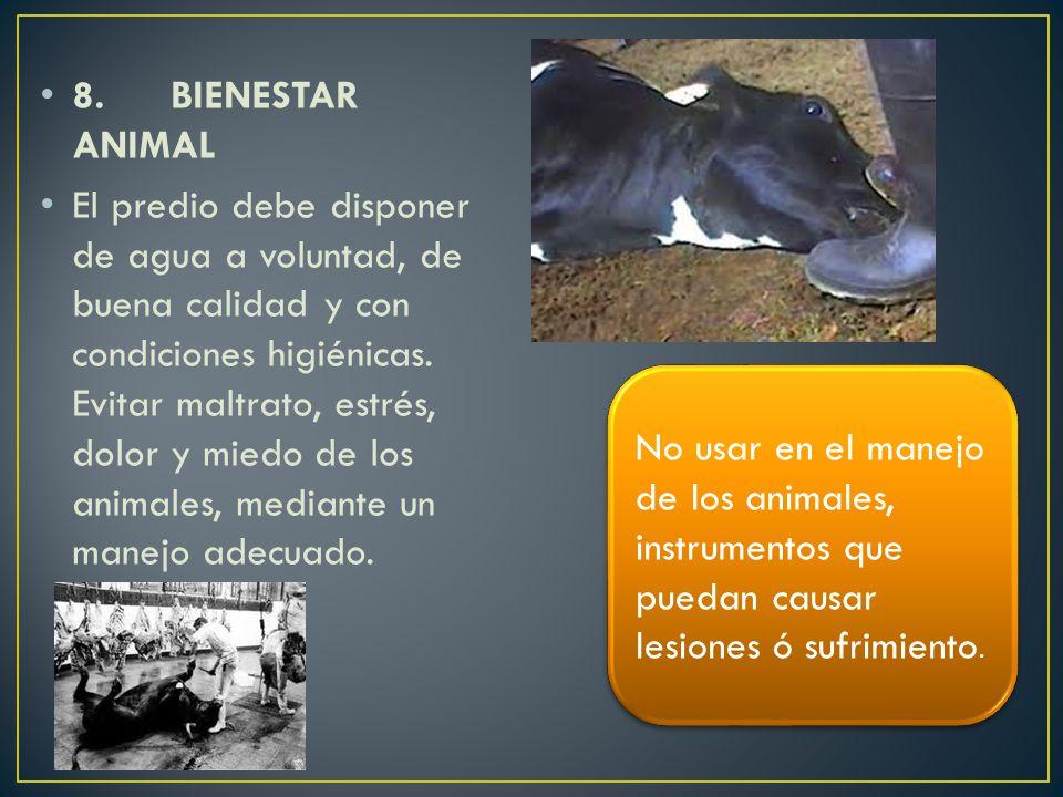 8. BIENESTAR ANIMAL