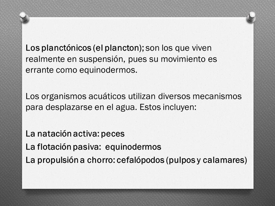 Los planctónicos (el plancton); son los que viven realmente en suspensión, pues su movimiento es errante como equinodermos.