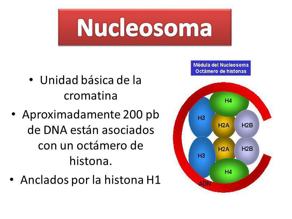 Nucleosoma Unidad básica de la cromatina