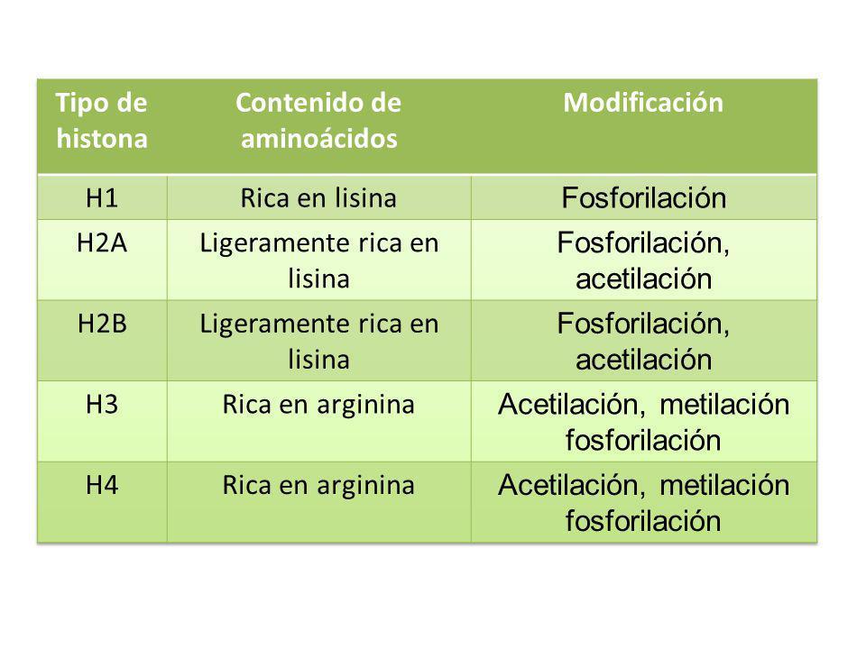 Contenido de aminoácidos