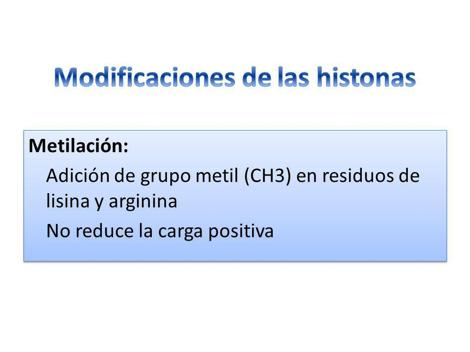 Modificaciones de las histonas