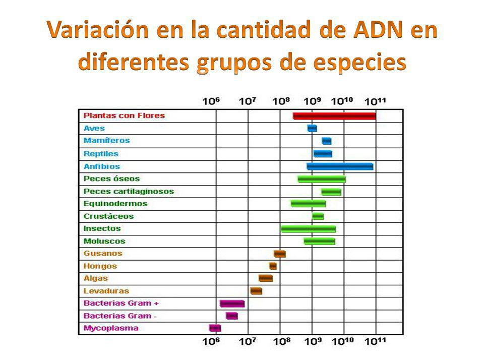 Variación en la cantidad de ADN en diferentes grupos de especies
