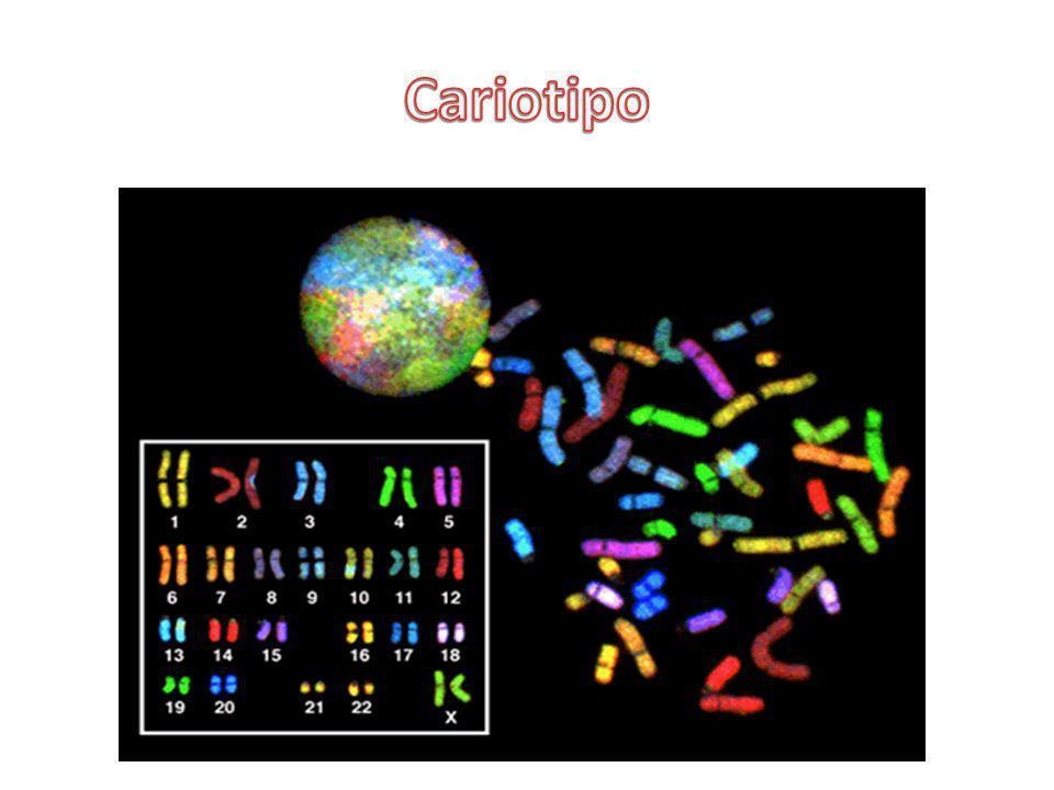 Cariotipo