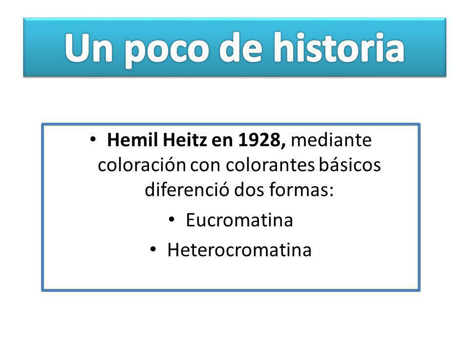 Un poco de historia Hemil Heitz en 1928, mediante coloración con colorantes básicos diferenció dos formas: