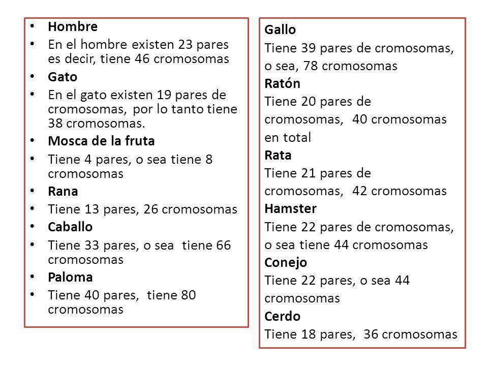 Hombre En el hombre existen 23 pares es decir, tiene 46 cromosomas. Gato.
