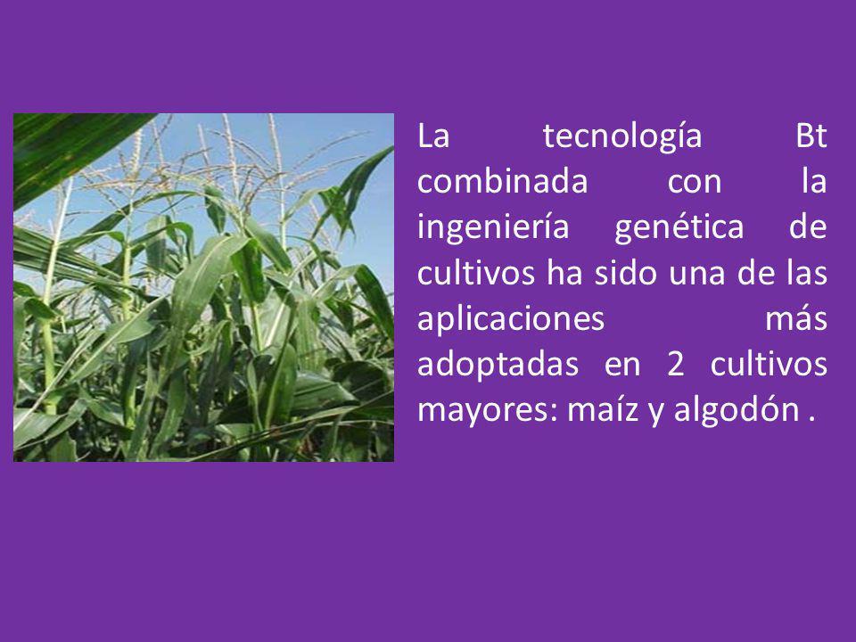 La tecnología Bt combinada con la ingeniería genética de cultivos ha sido una de las aplicaciones más adoptadas en 2 cultivos mayores: maíz y algodón .