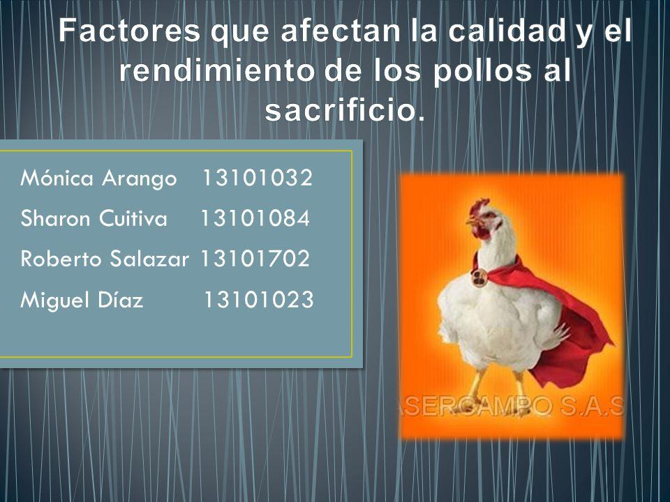 Factores que afectan la calidad y el rendimiento de los pollos al sacrificio.