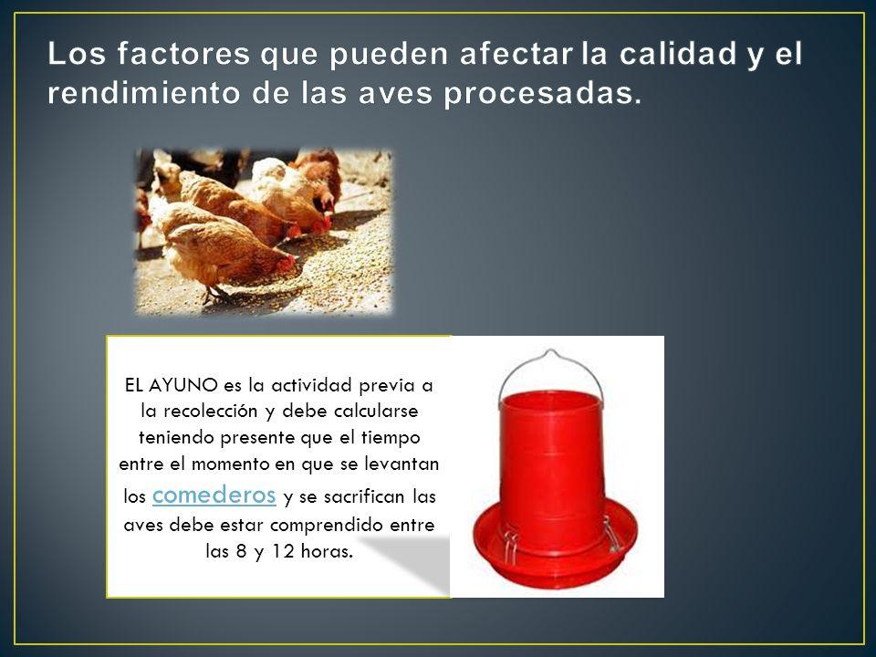 Los factores que pueden afectar la calidad y el rendimiento de las aves procesadas.