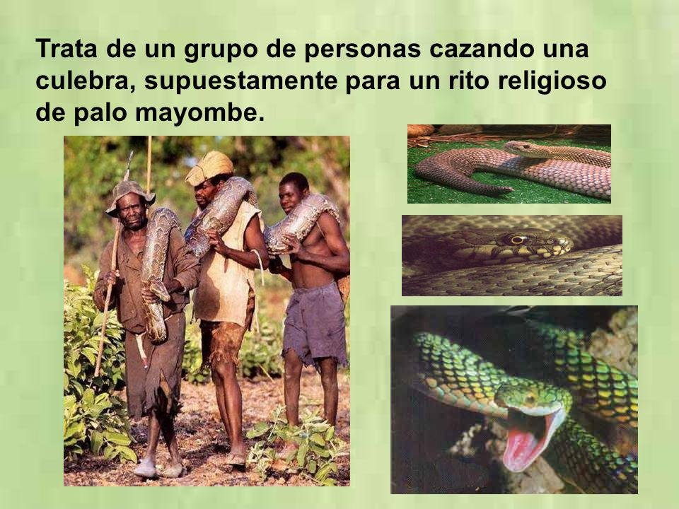 Trata de un grupo de personas cazando una culebra, supuestamente para un rito religioso de palo mayombe.