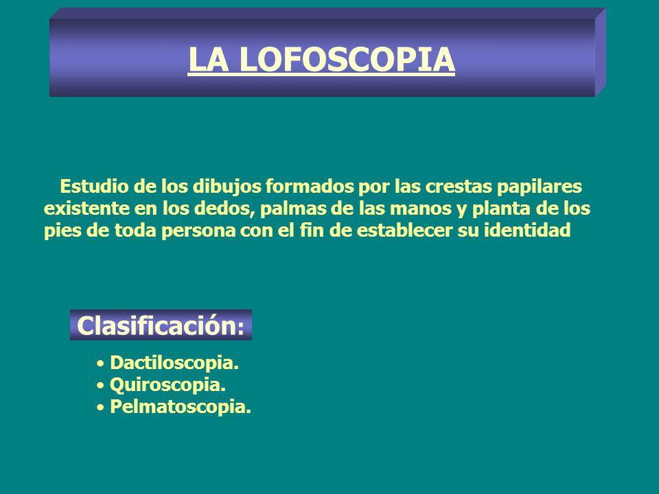 LA LOFOSCOPIA Clasificación: