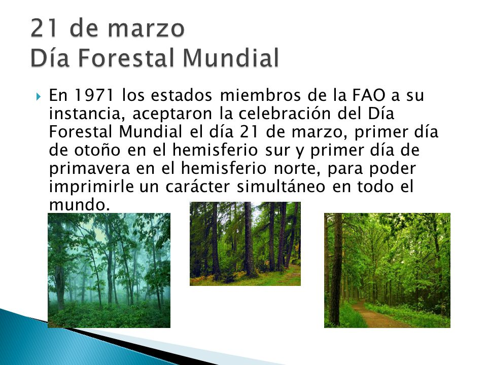 21 de marzo Día Forestal Mundial