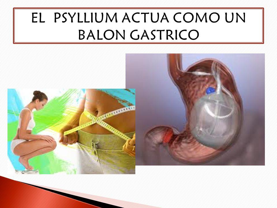 EL PSYLLIUM ACTUA COMO UN BALON GASTRICO