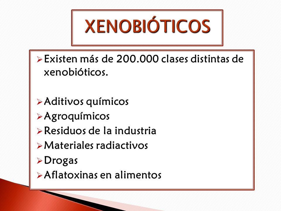 XENOBIÓTICOS Existen más de 200.000 clases distintas de xenobióticos.