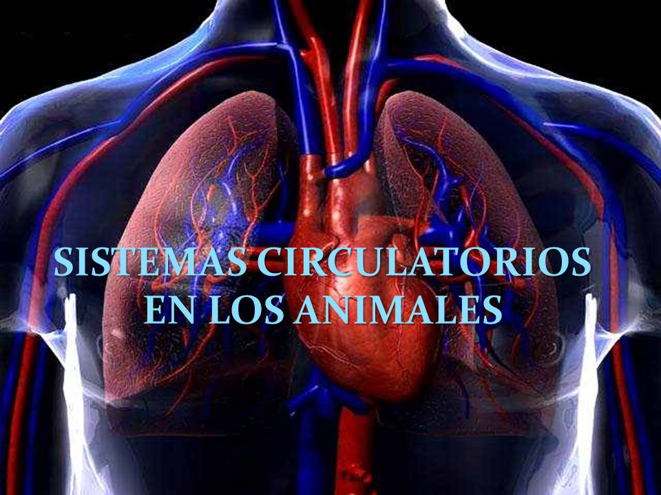 SISTEMAS CIRCULATORIOS EN LOS ANIMALES