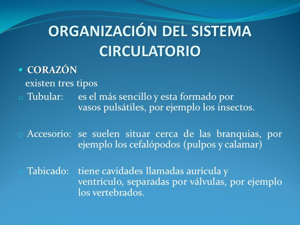 ORGANIZACIÓN DEL SISTEMA CIRCULATORIO