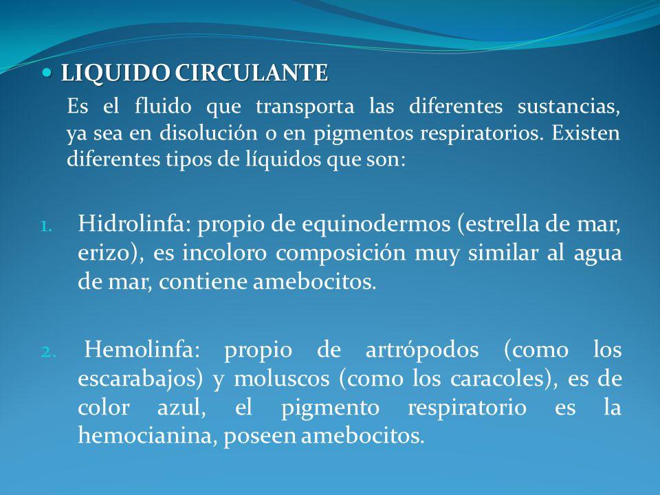 LIQUIDO CIRCULANTE