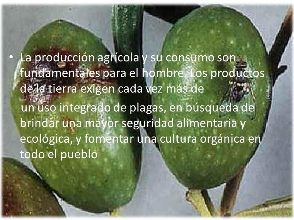 La producción agrícola y su consumo son fundamentales para el hombre