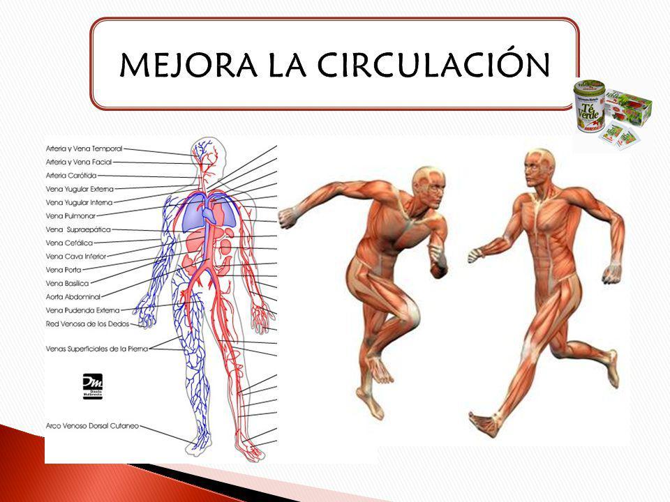MEJORA LA CIRCULACIÓN
