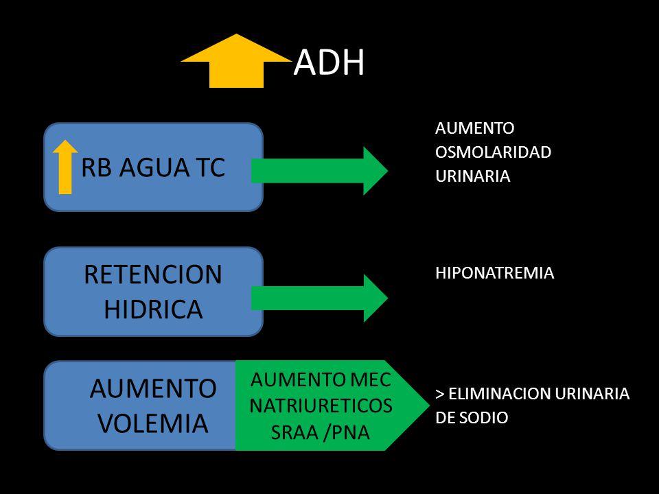ADH RB AGUA TC RETENCION HIDRICA AUMENTO VOLEMIA AUMENTO MEC
