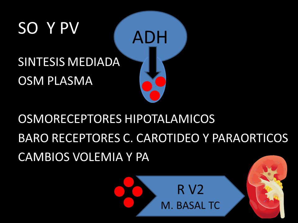 SO Y PV ADH. SINTESIS MEDIADA OSM PLASMA OSMORECEPTORES HIPOTALAMICOS BARO RECEPTORES C. CAROTIDEO Y PARAORTICOS CAMBIOS VOLEMIA Y PA