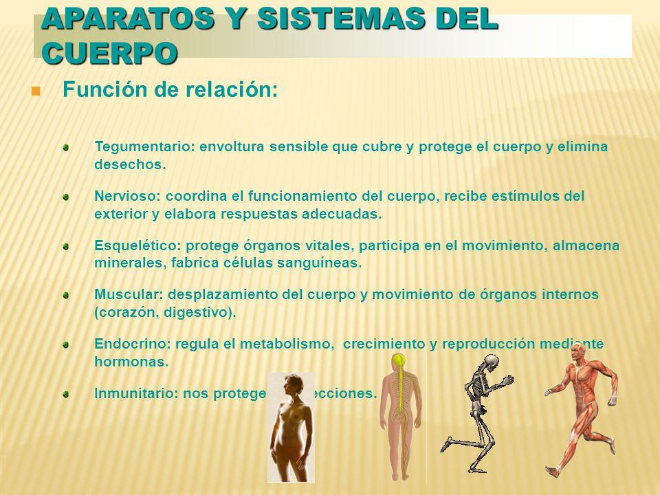 Aparatos y sistemas del cuerpo