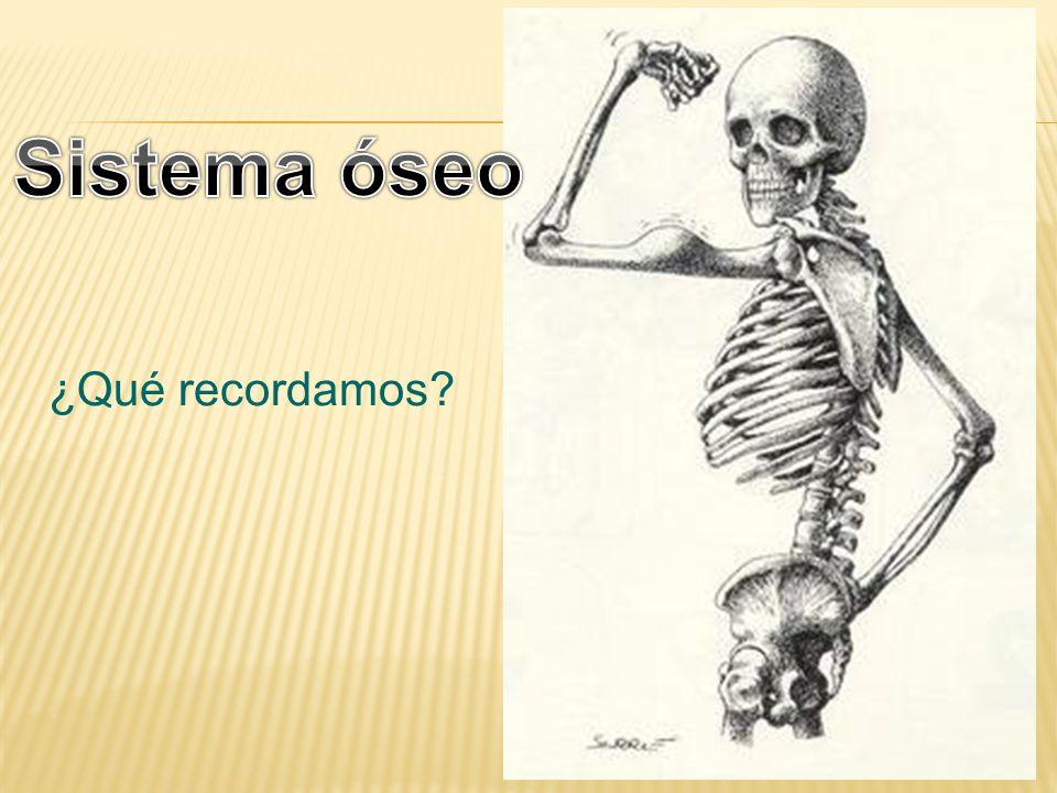 Sistema óseo ¿Qué recordamos