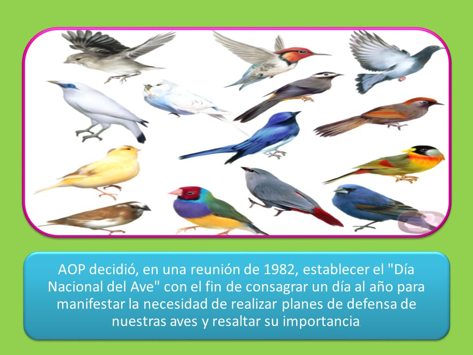 AOP decidió, en una reunión de 1982, establecer el Día Nacional del Ave con el fin de consagrar un día al año para manifestar la necesidad de realizar planes de defensa de nuestras aves y resaltar su importancia.