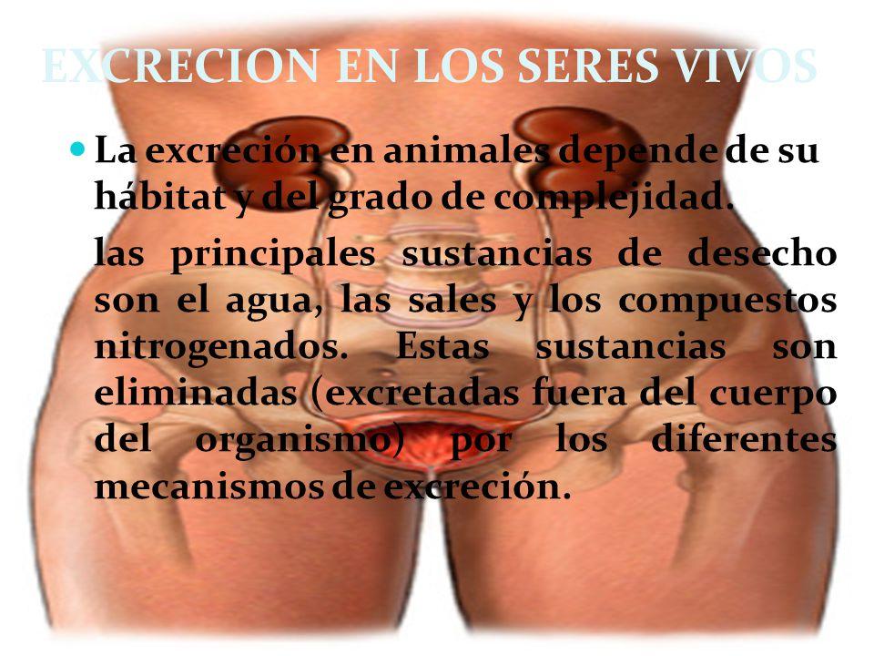 EXCRECION EN LOS SERES VIVOS