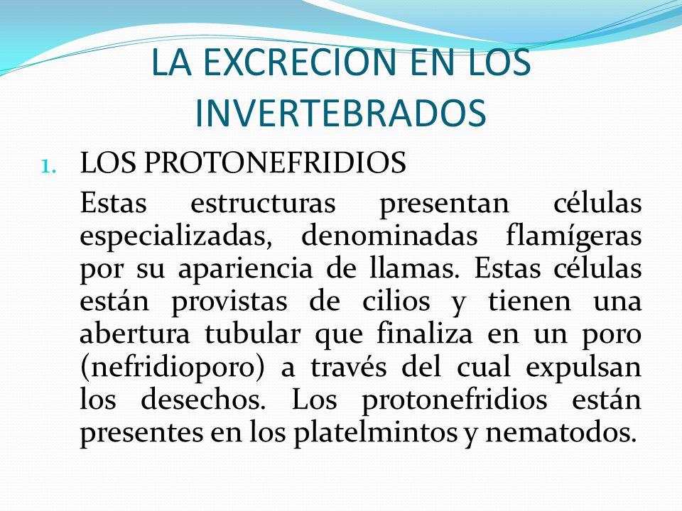 LA EXCRECION EN LOS INVERTEBRADOS