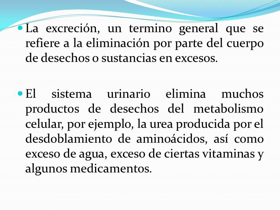 La excreción, un termino general que se refiere a la eliminación por parte del cuerpo de desechos o sustancias en excesos.