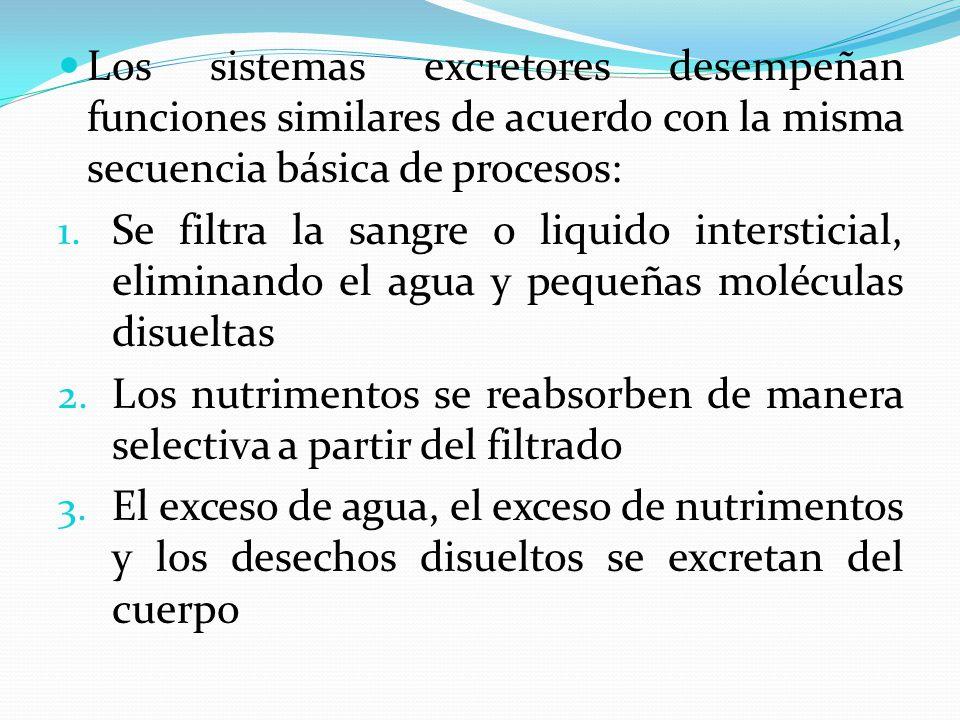 Los sistemas excretores desempeñan funciones similares de acuerdo con la misma secuencia básica de procesos: