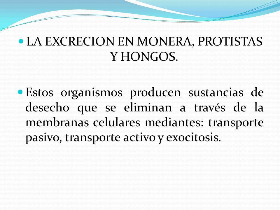 LA EXCRECION EN MONERA, PROTISTAS Y HONGOS.