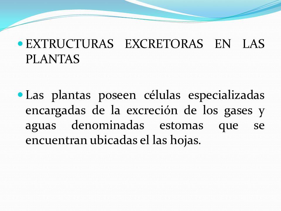 EXTRUCTURAS EXCRETORAS EN LAS PLANTAS