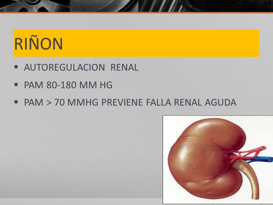 RIÑON AUTOREGULACION RENAL PAM 80-180 MM HG