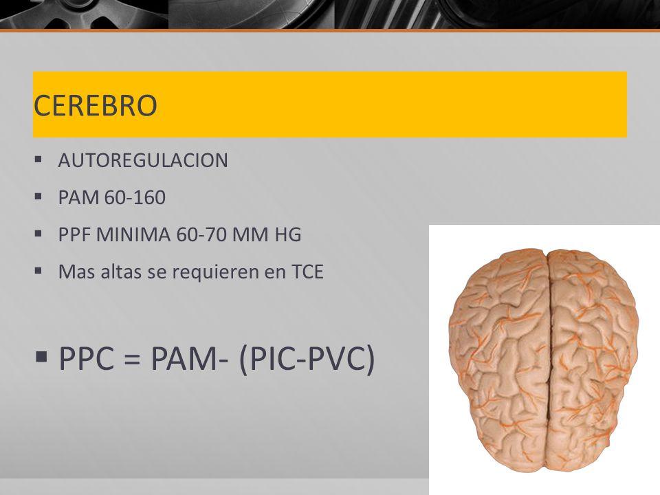 PPC = PAM- (PIC-PVC) CEREBRO AUTOREGULACION PAM 60-160