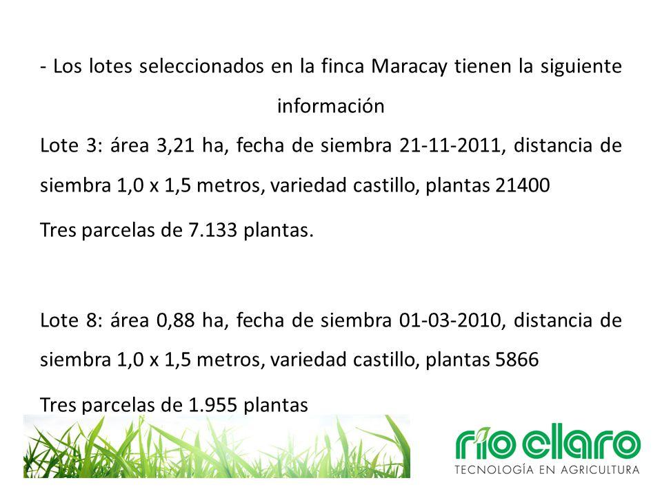 - Los lotes seleccionados en la finca Maracay tienen la siguiente información Lote 3: área 3,21 ha, fecha de siembra 21-11-2011, distancia de siembra 1,0 x 1,5 metros, variedad castillo, plantas 21400 Tres parcelas de 7.133 plantas.